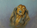 An head-on oil portrait of a long haired Dachshund dog with a soft lilac, gradated background.