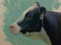 An oil painting of a holstein heifer (No 817), a member of the herd at Rocky Pointe Farm in Point of Rocks, MD.