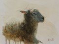 Painting by Simon Bland: Oil painting of a sheep