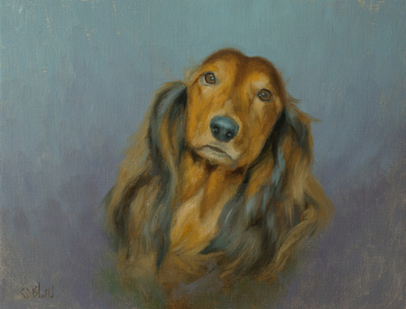 Commissioned portrait of Tootsie, a long haired Dachshund