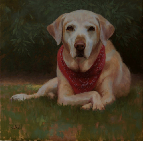 Oil portrait of yellow labrador retriever Honey