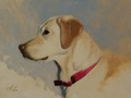 An oil portrait sketch of a yellow lab, Cheyenne.