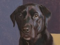 A sketch portrait of a black lab called Oban done in oil on linen panel.