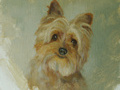 An oil painting of a small wire haired Yorkshire terrier painted against a greenish raw umber background.