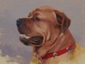 Oil painting of rottweiler/mastiff cross called Spartacus