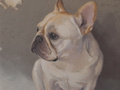 A portrait of a French Bulldog