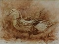Transparent oil painting of a duck