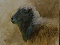 Oil painting of polled ram