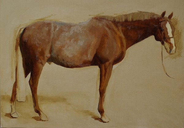 Starting a conformation portrait of a chestnut horse