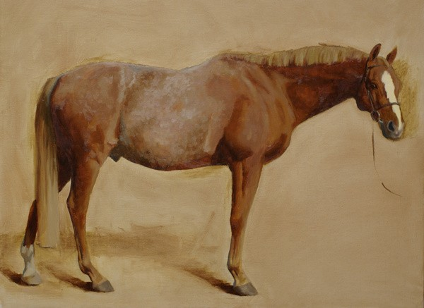 A conformation portrait of a horse in the early stages