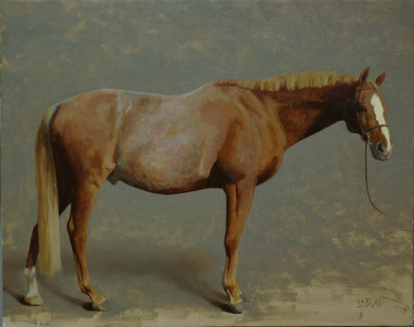 A conformation portrait of a chestnut horse in progress