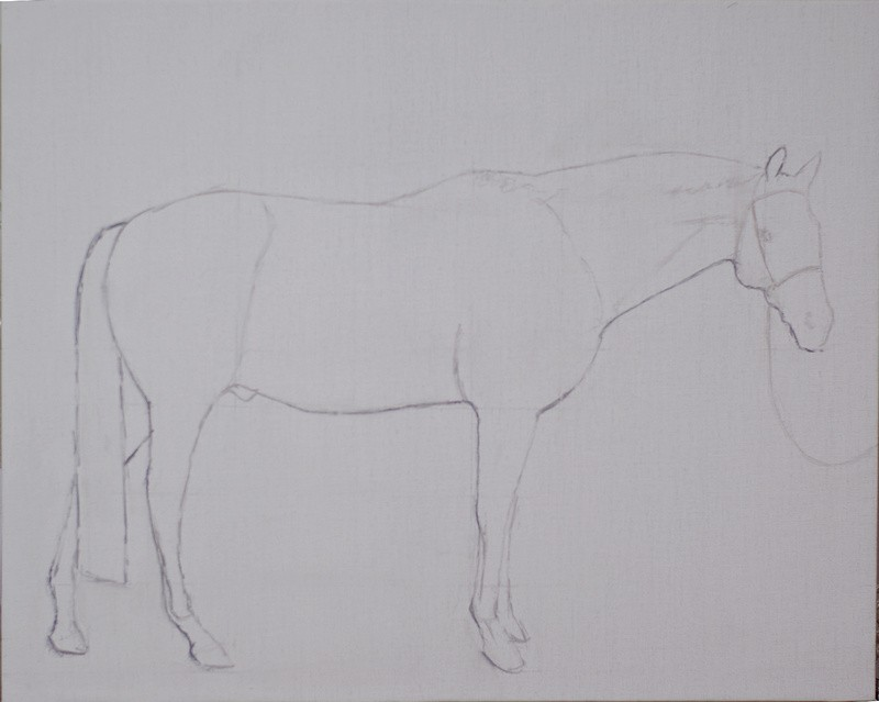 Layout for a conformation portrait of a horse