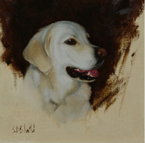 Portrait sketch of a white Labrador dog in oil