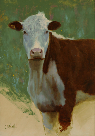 A portrait of a brown and white Angus cow