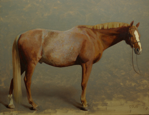 A completed conformation portrait of a chestnut horse with gray background