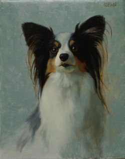 A portrait of a papilion dog with blue green background