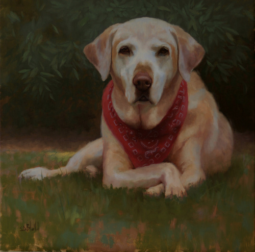A portrait of a yellow lab laying in grass