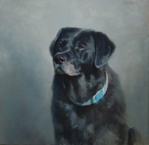A portrait of a black lab with gradated gray background
