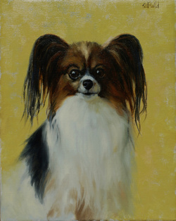A portrait of a papilion dog with yellow background
