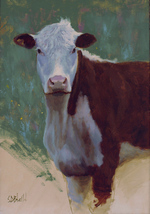 A portrait of a brown and white cow