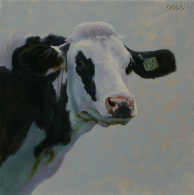 Portrait of a Holstein cow with blue-gray background