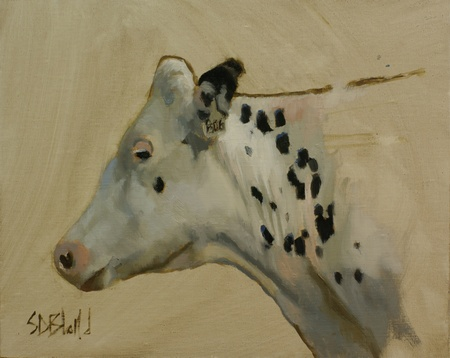 A portrait of a white holstein heifer in oil