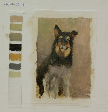 A color study for the portrait of an Australian shepherd dog