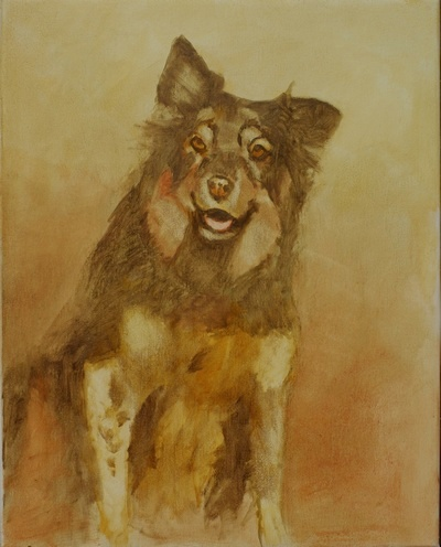 The block in for a portrait of an Australian shepherd dog