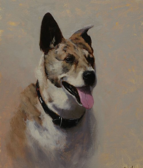 A portrait of an Australian Cattle Dog mix with gray background