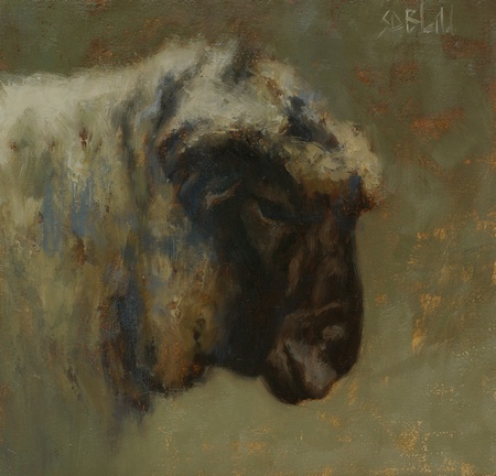 Portrait of a black-faced ram
