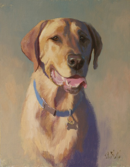 Sketch portrait of a yellow lab