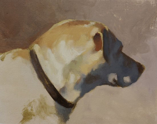 A color study for a portrait of a yellow lab