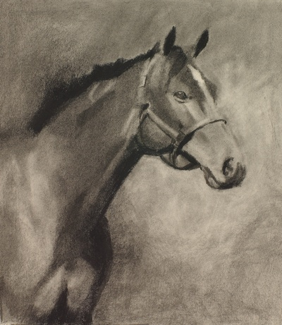 Charcoal study for a horse portrait