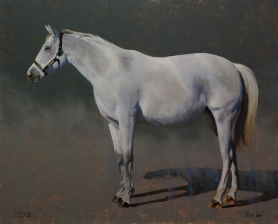 A conformation portrait of a brood mare horse