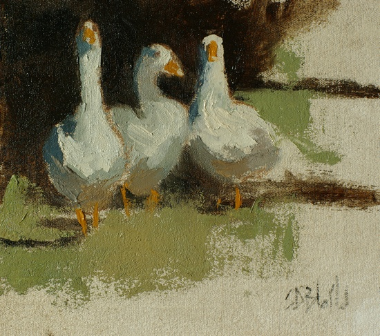 Study of geese