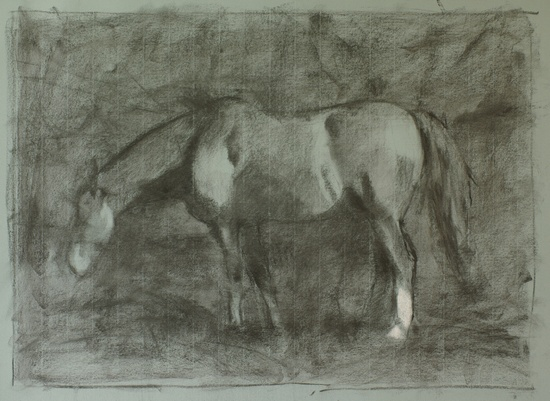 Shire Horse Charcoal Sketch (WIP). 14x20, charcoal on paper. 2017