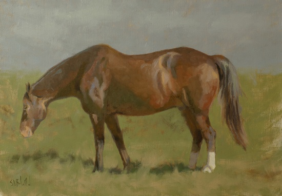 Horse. 14x20, oil on linen. 2017 painting by Simon Bland