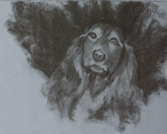 Study of Tootsie, charcoal on paper by artist Simon Bland