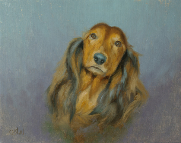 Another Portrait of a Long Haired Dachshund
