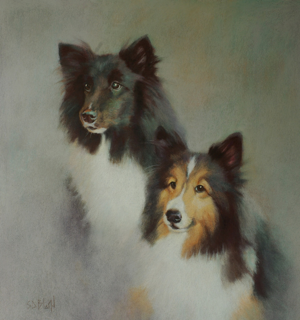 Pastel portrait of two Shelties by artist Simon Bland