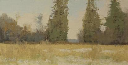 Cedars in a winter landscape